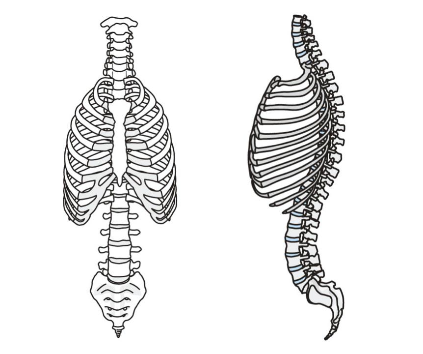 背骨正面と横