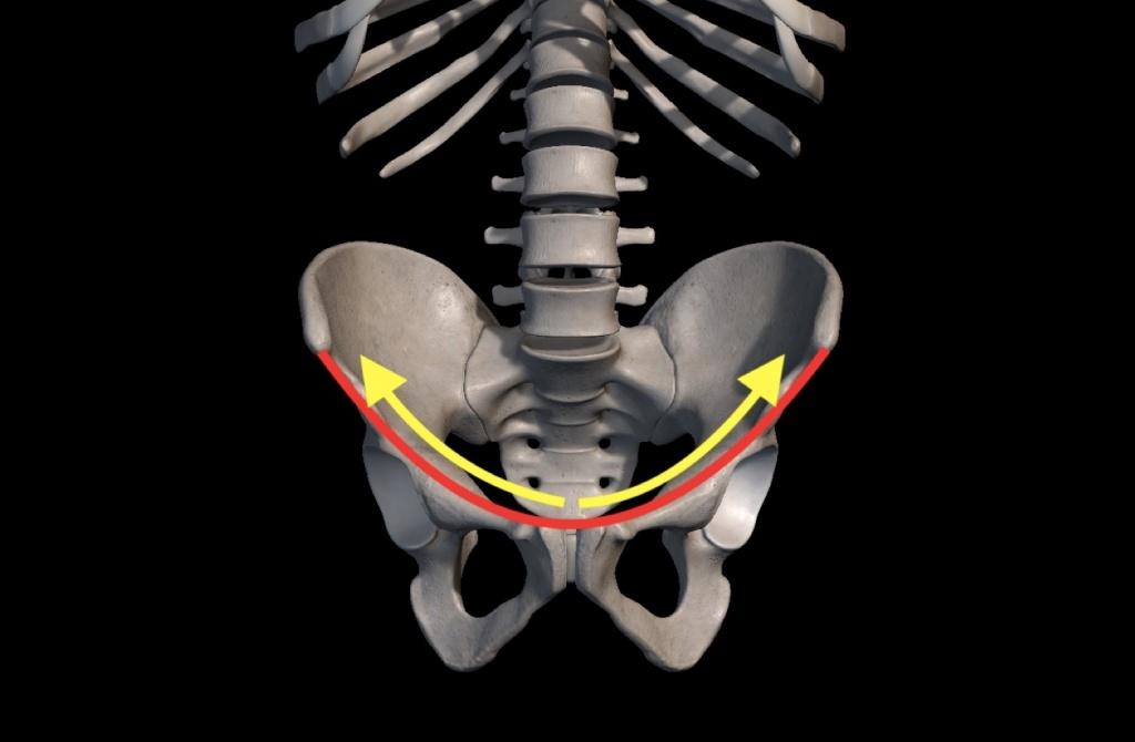 恥骨と鼠径靭帯