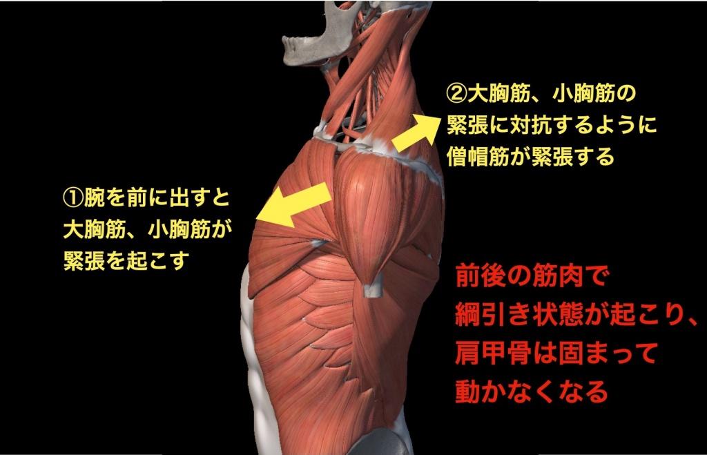 肩甲骨が固着する原理