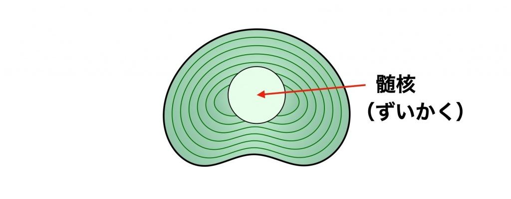 椎間板の繊維輪