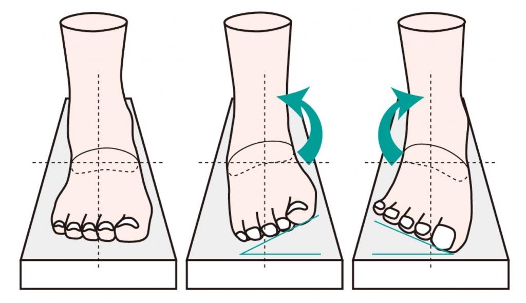 足首の動き
