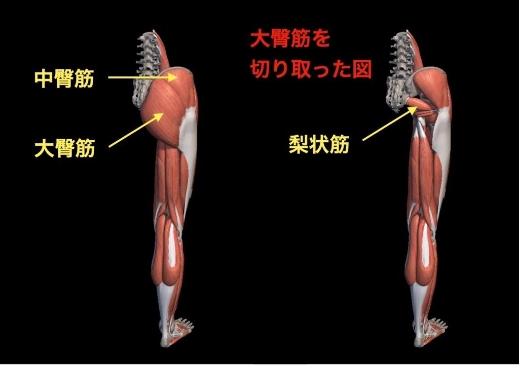 下半身の解剖図